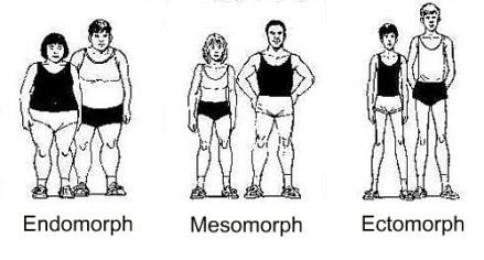 General body types