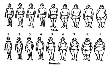 Scales of body type